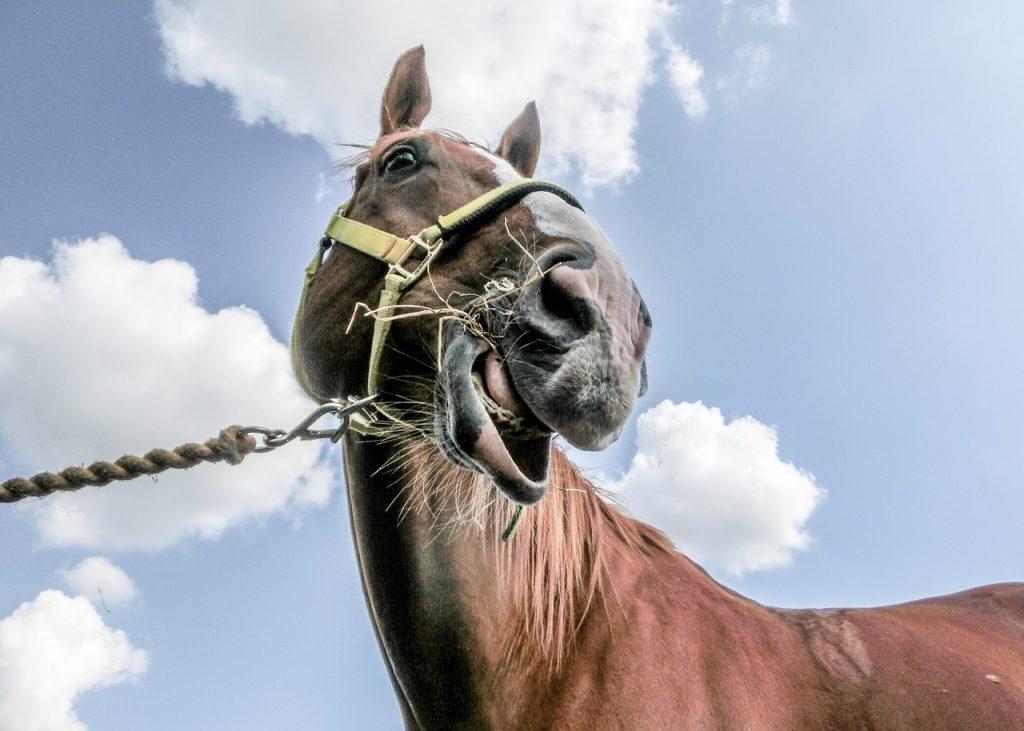 Pferdezahnarzt Kontrolle