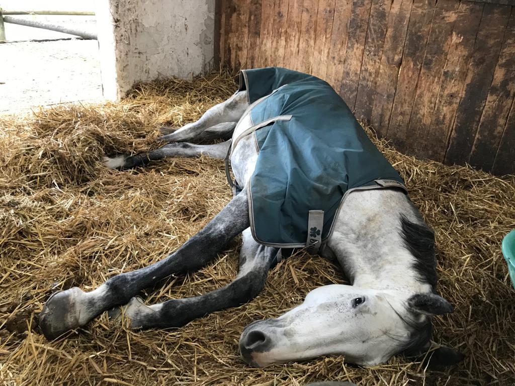so-schlafen-pferde-blogartikel